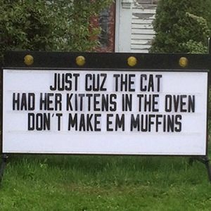 Just-Cuz-the-Cat